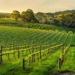 Linke Fencing / Linke Vineyard Services