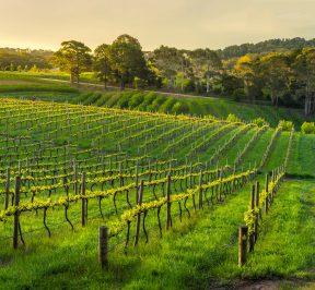 Linke Fencing and Linke Vineyard Services