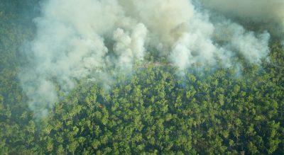 Bushfire assistance for Bega communities