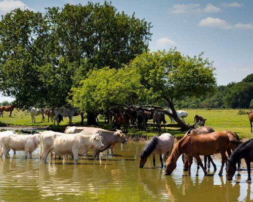 Help livestock and horses cope with unusual post-Summer weather