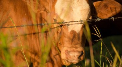 Farmers reminded to vaccinate to prevent livestock deaths