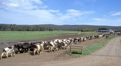Farmer's fund open to South West Vic fire affected dairy…