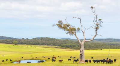 BIG boost for northern beef businesses