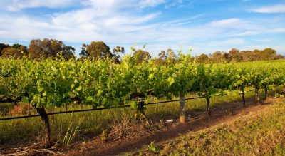 Winemakers' welcome Labor's commitment to Free Trade