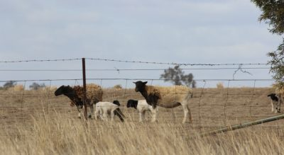 Agricultural sector confidence showing early signs of recovery, but drought…