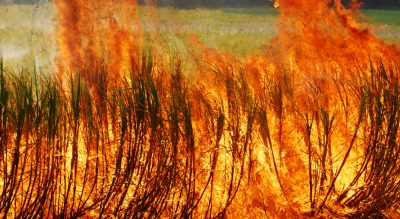 Sugarcane fire toll grows