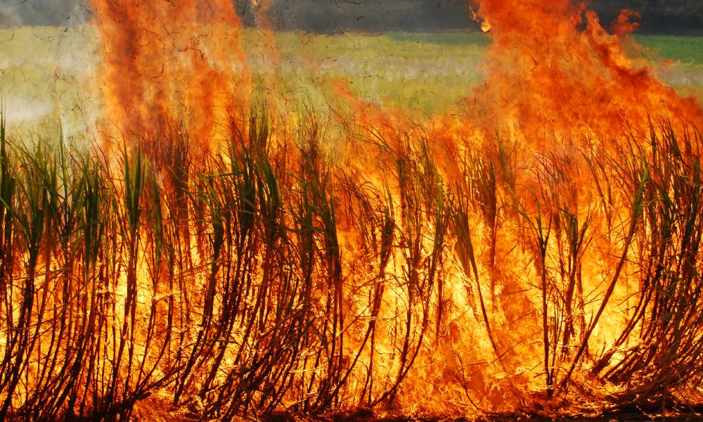 sugarcane burning stock image