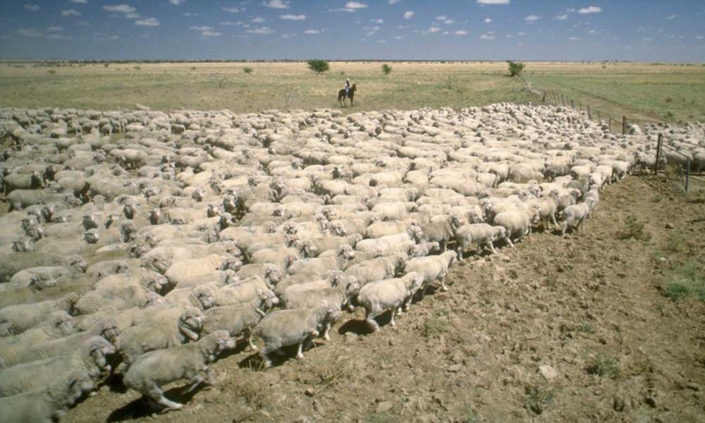 Farm production above average despite drought the fence