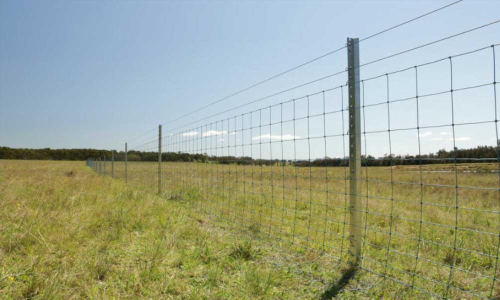 waratah fencing