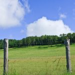 Wolf Rural Fencing
