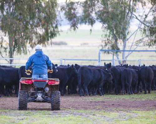 Rebate available: Quad bike fatalities serve as safety warning