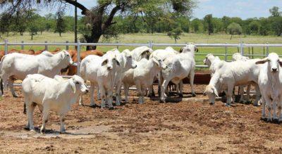 I-A CEPA win for Australian beef industry