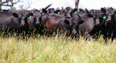 Cattle markets & southern rain stabilise rural commodities index