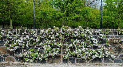 Fruitful fence-art's modern revival