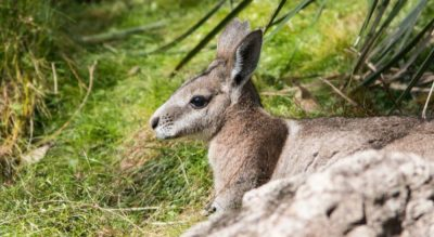 Predator proof fencing vital for conservation