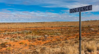 Opportunities for fencing suppliers & contractors with SA Dog Fence…