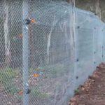 Conservation fencing Aussie Ark - Aussie mammals