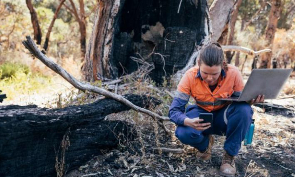 Female environmental worker looking at a tree damaged by a bushfire
