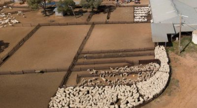 Australian agricultural production strong