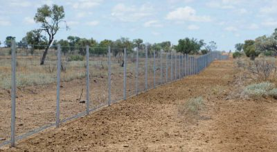 WIRES and Landcare Australia join forces in $1 million post-bushfire…